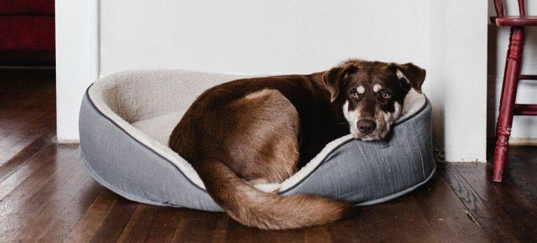 a dog in its crib