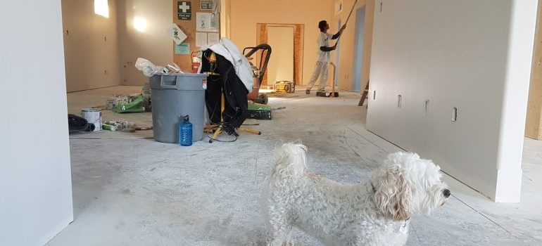 Picture of apartment renovation with a dog in the middle